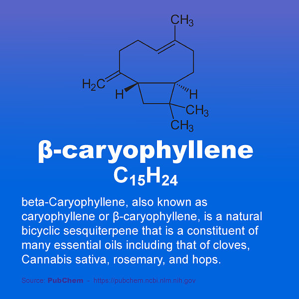 Well Oiled - InstaFact - beta-caryophyllene